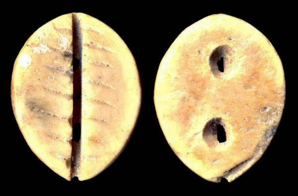 Ancient China bone imitation cowrie coin of Zhou Dynasty